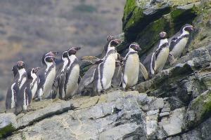 Reserva pinguino de humboldt