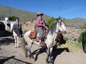 cheval de paso péruvien