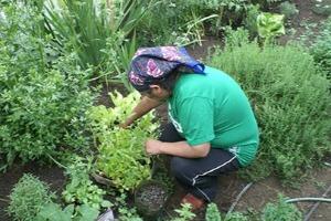 récolte de plantes