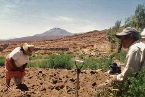 agriculteurs au Chili