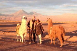 chameaux dans le désert d'Atacama