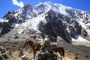 Montagne neige et mule