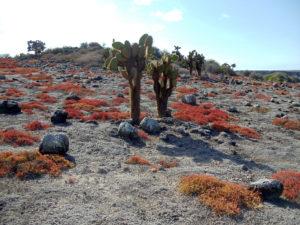 Buissons et végétation aux îles Galapagos