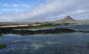 Rivage des Galapagos à Santa-Cruz