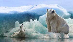 faune arctique