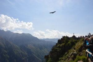 Photo de condors, croix des condors