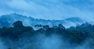 Foret au Guatemala