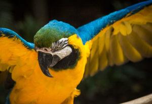 Oiseau Macaw Mountain