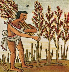 Agriculteur aztèque