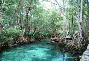 Piscine d'eau douce dans une zone de mangroves dans la Ría Celestún au Yucatán au Mexique - les réserves naturelles du Yucatán
