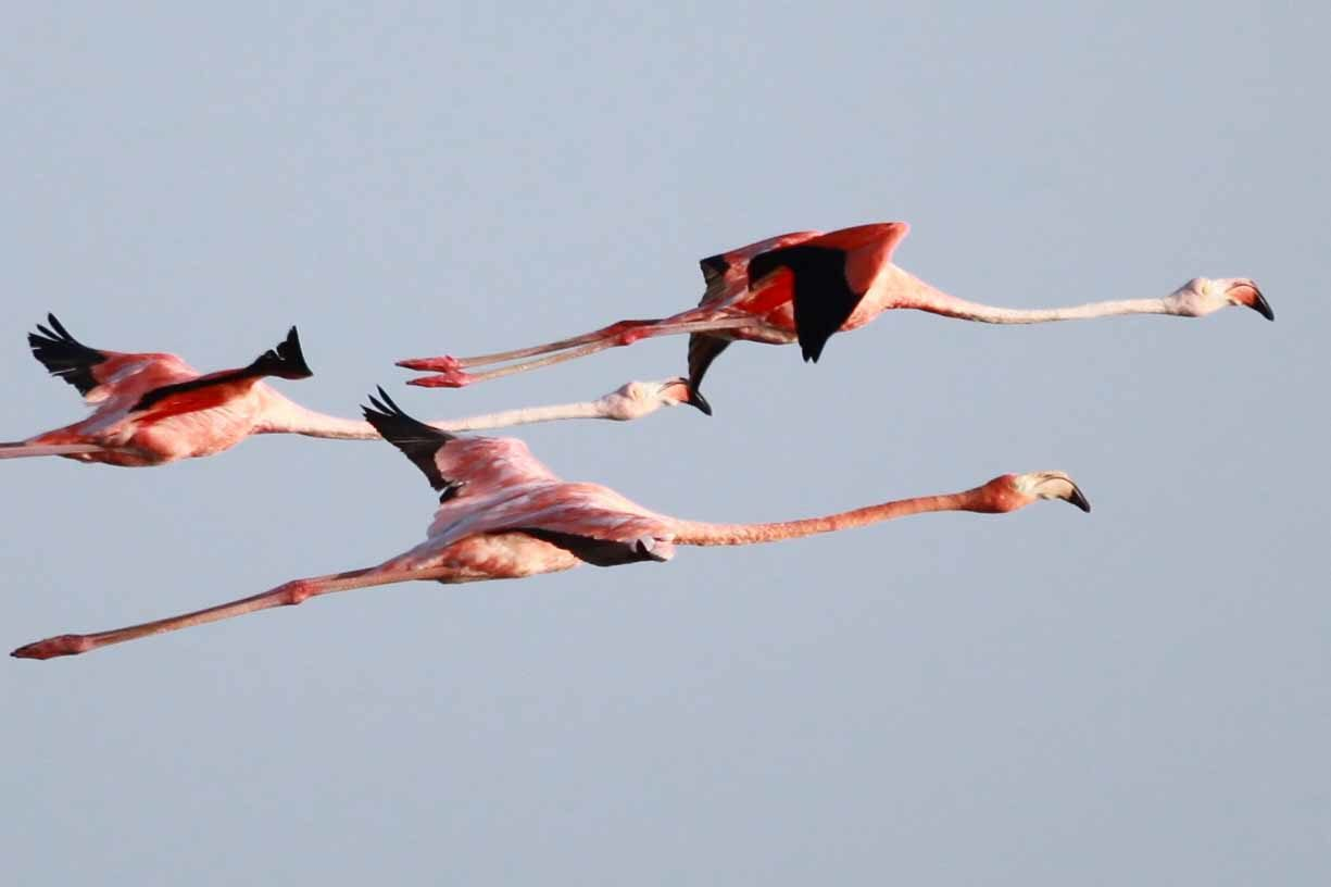flamants-roses-holbox-circuit-éco-responsable