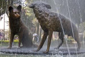 fontaine-Coyoacán