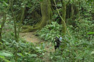 jungle-lacandone-communauté-lacandone-mexique