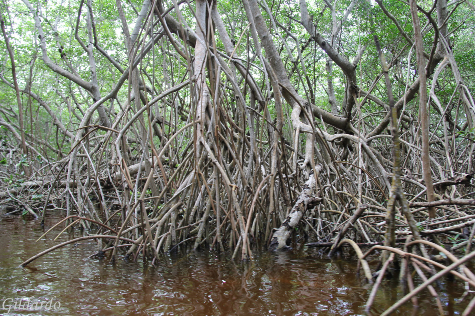 cénote-oxman-valladolid-15-jours-yucatan