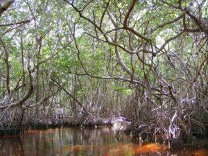 zone-mangrove-réserve-naturelle-celestun-15-jours-yucatan