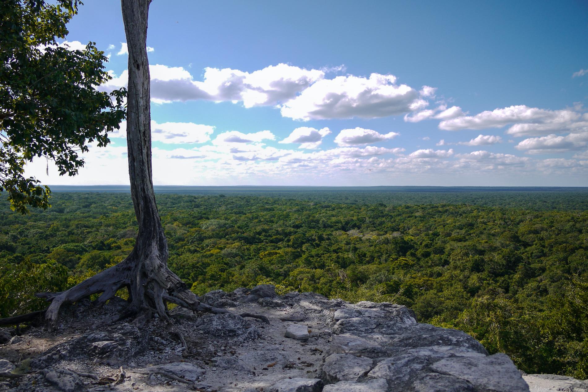 vue-depuis-calakmul-cité-communauté-maya