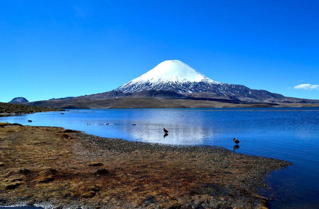 visiter le nord du chili : parc Lauca