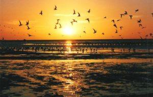Plage d'Argentine - plage de Punta Rasa