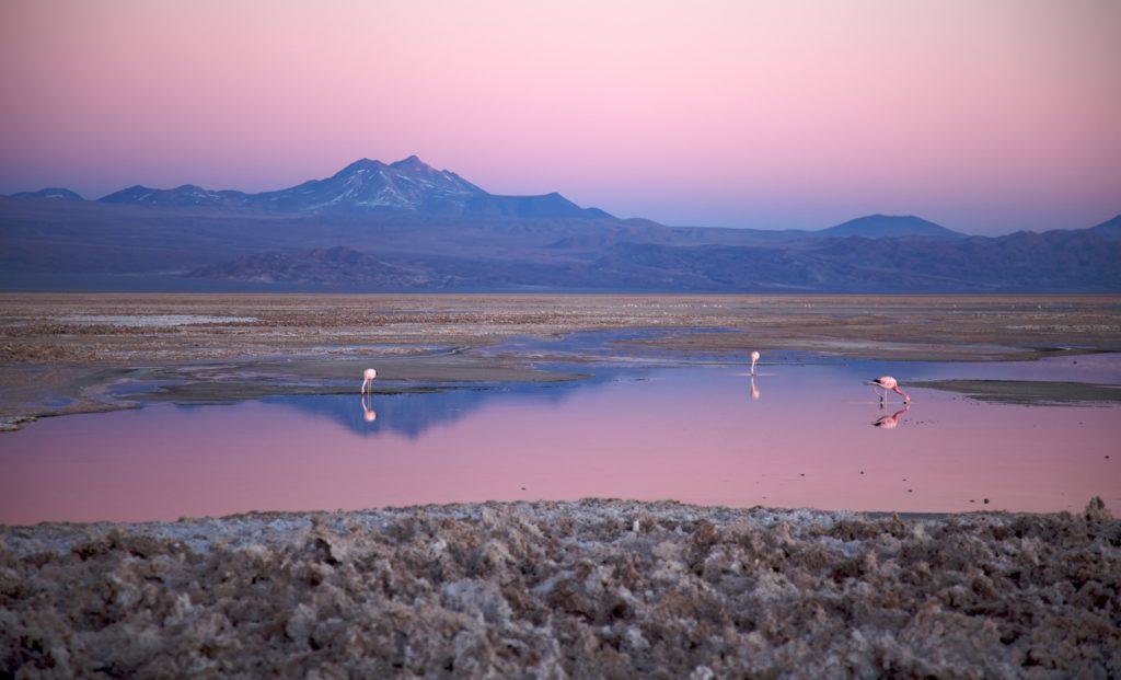 Visiter le désert d'Atacama, Salar d'Atacama, Chili