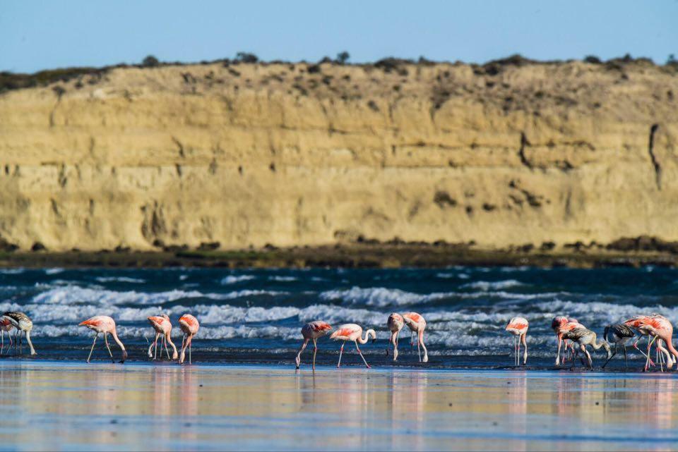 Flamants roses d'une plage d'Argentine, Cabo Curioso