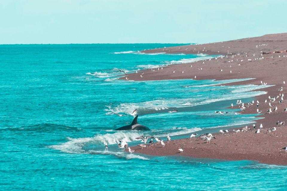 Une plage de Puerto Madryn, Argentine