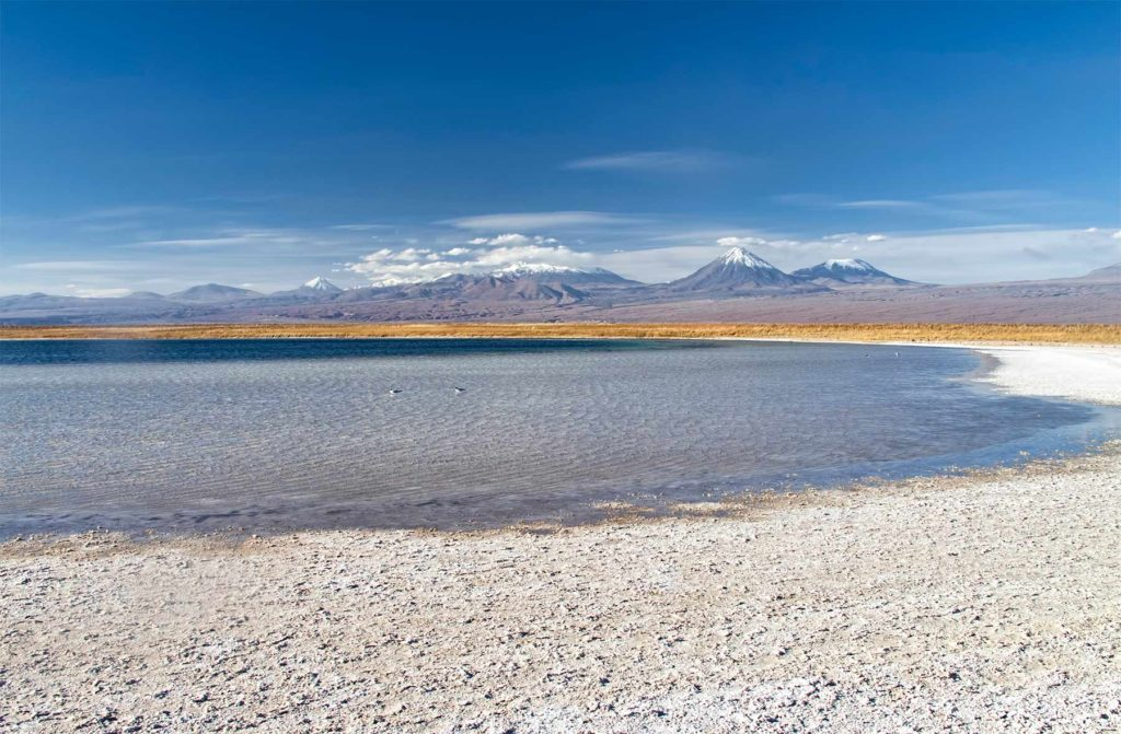Visiter la Laguna de Cejar dans le désert d'Atacama