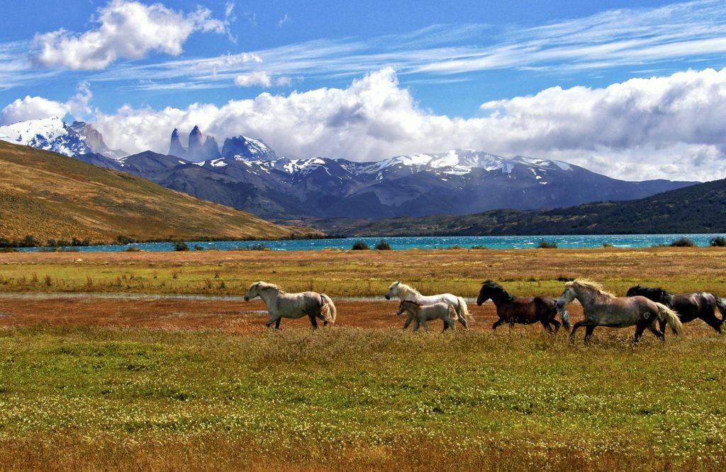 Que voir à Torres del Paine ?