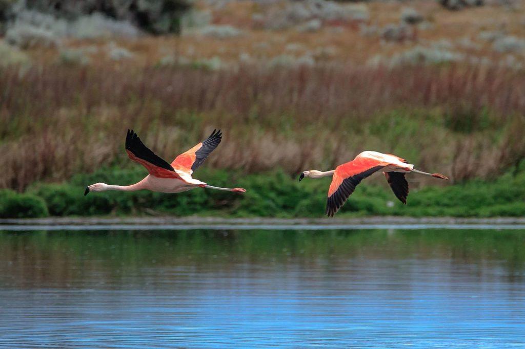 Visiter La réserve naturelle Laguna Nimez