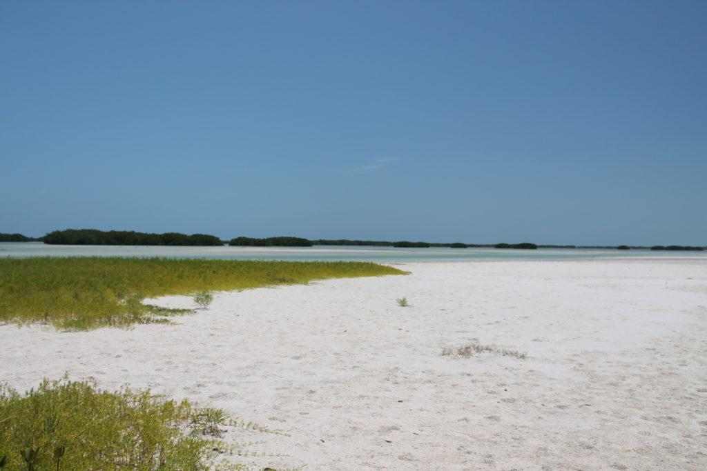Punta Mosquito au bout de l'île Holbox