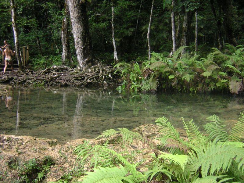 Jungle dans le parc Semuc Champey