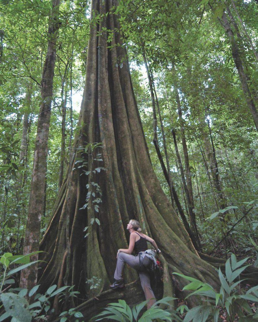 arbre immense du Costa Rica