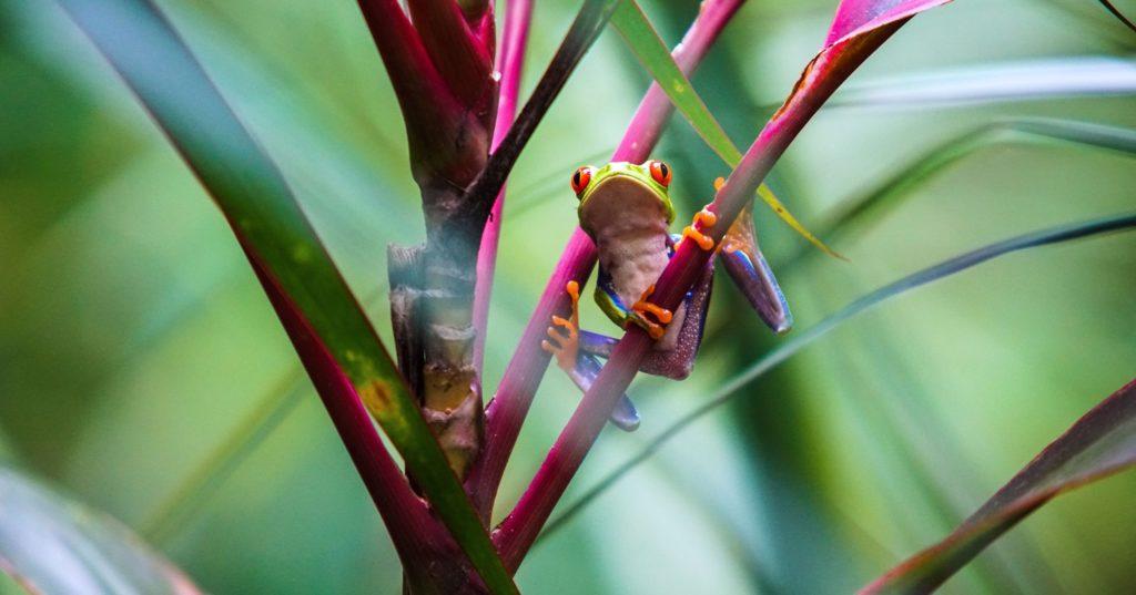 grenouille sur une branche