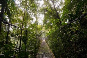 Pont suspendu au milieu de la jungle