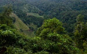 Vallée de Savegre Costa Rica
