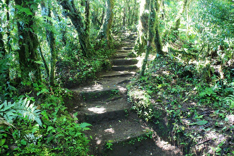 escalier dans la jungle
