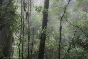 forêt brumeuse au costa rica volcan jungle