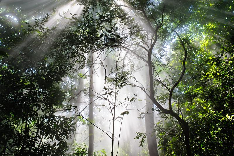 forêt dans la brume