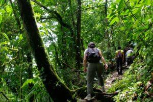 Trek dans la jungle du costa rica