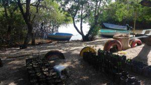 Plan de reforestation de mangrove, Île Chira