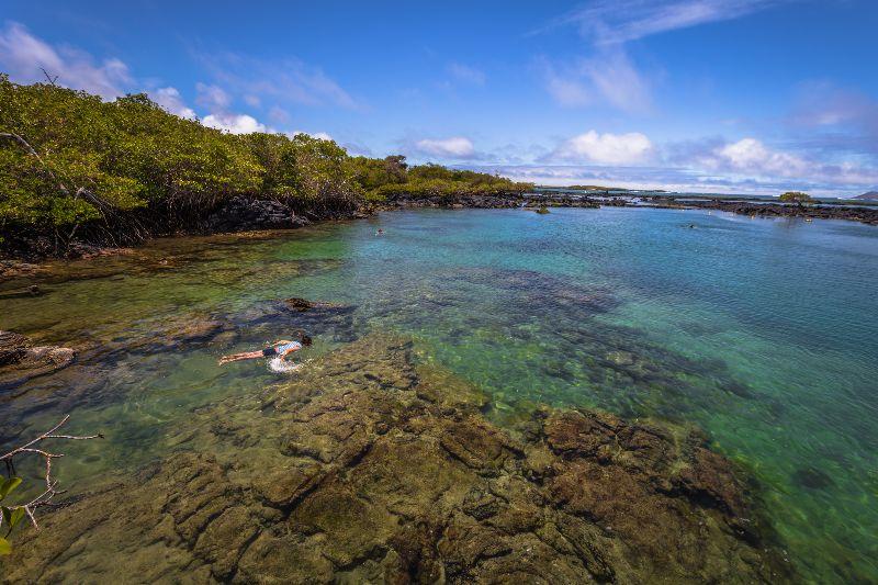 Lagune Concha Perla sur l'île Isabela aux Galapagos