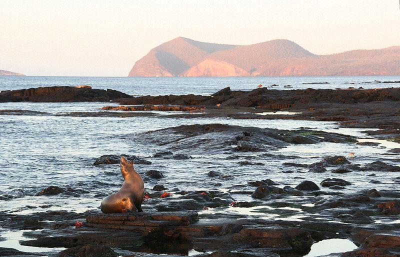 Lion de mer sur les rochers de la côte des îles Galapagos en Equateur