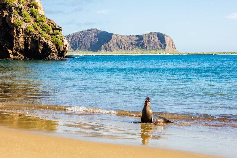 Lion de mer sur une plage de l'île de San Cristobal aux Galapagos