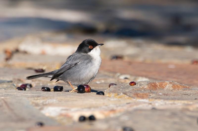 Visiter l'Andalousie : le parc national de Doñana et ses nombreuses espèces d'oiseaux