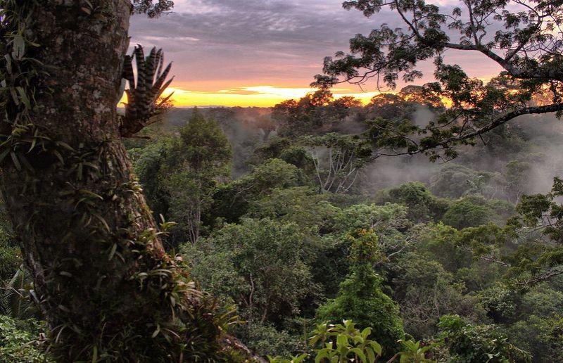 Vue sur la canopée du parc national de Yasuni en Amazonie