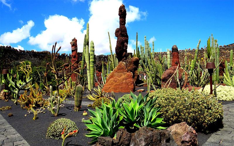 Vue d'ensemble du Jardin de Cactus de César Manrique à Lanzarote